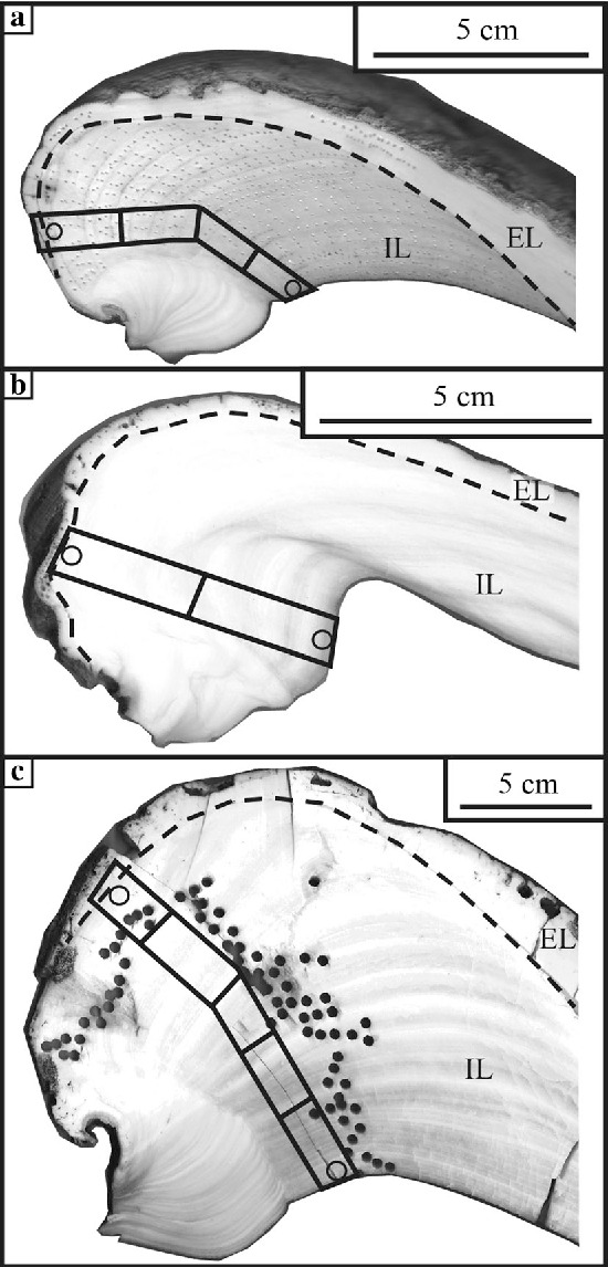 A Biomineralization Study Of The Indo Pacific Giant Clam Tridacna