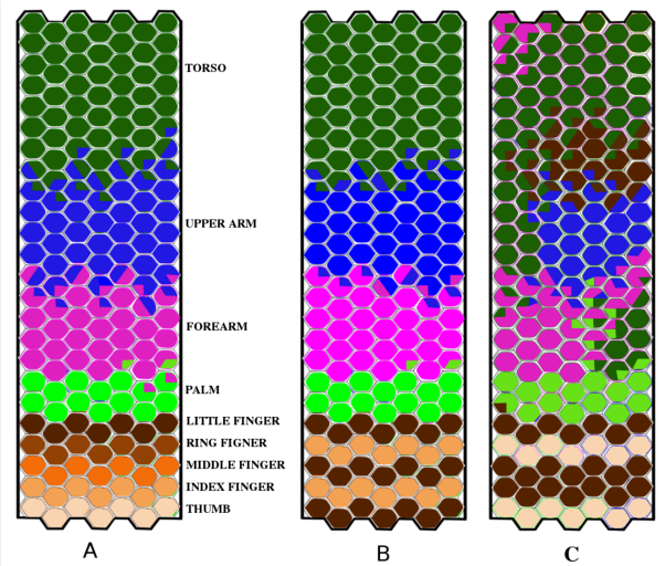 Figure 4 for Where is my forearm? Clustering of body parts from simultaneous tactile and linguistic input using sequential mapping