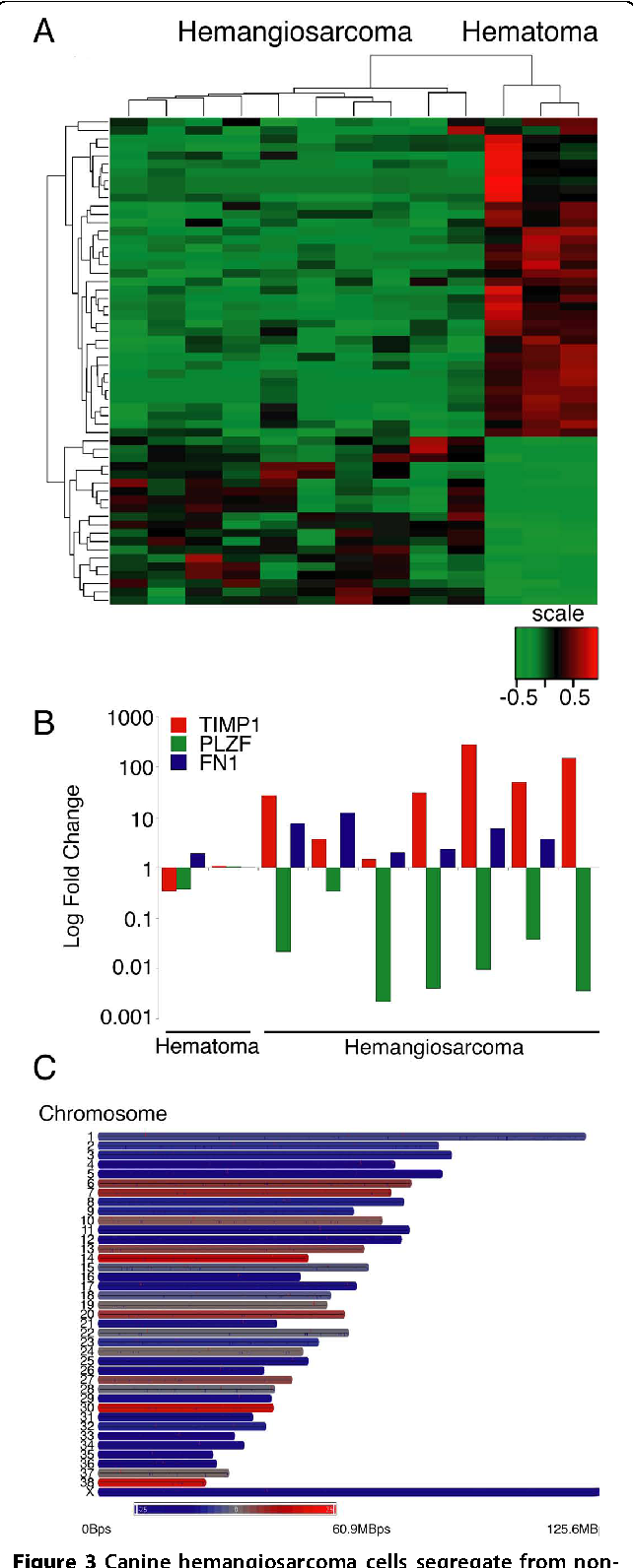 Figure 3 Canine hemangiosarcoma cells segregate from nonmalignant splenic hematoma cells via their gene expression profile. (A) Hierarchical clustering and heat map of differentially expressed genes in 10 hemangiosarcoma samples versus three splenic hematoma samples. Increasing red intensity indicates increased gene expression and increasing green intensity indicates decreased gene expression as shown in the scale bar. The scale