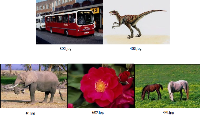 Fig. 4. Images used for testing