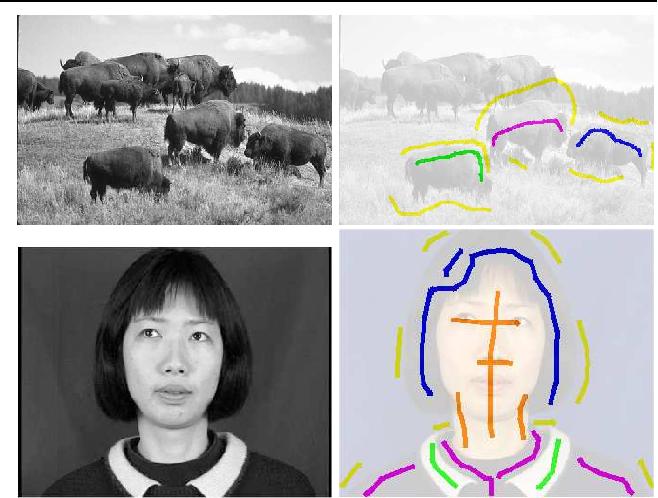Figure 1 for A New Algorithm for Interactive Structural Image Segmentation