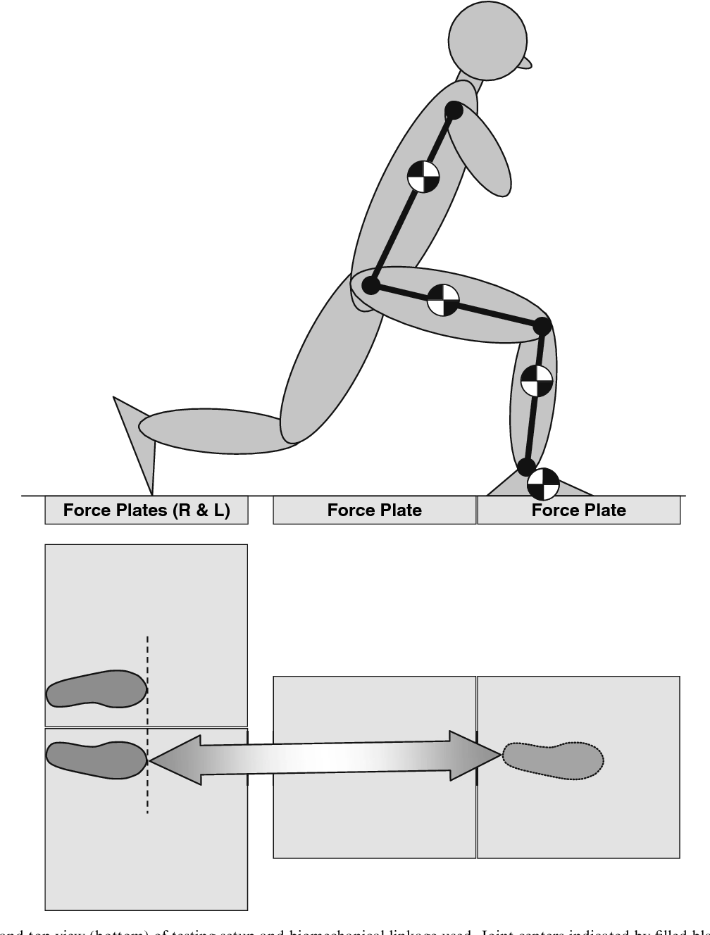Fig. 1. Side view (top) and top view (bottom) of testing setup and biomechanical linkage used. Joint centers indicated by filled black circles and segment centers of mass (foot, shank, thigh, and head–arms–torso) indicated by checkered circles.