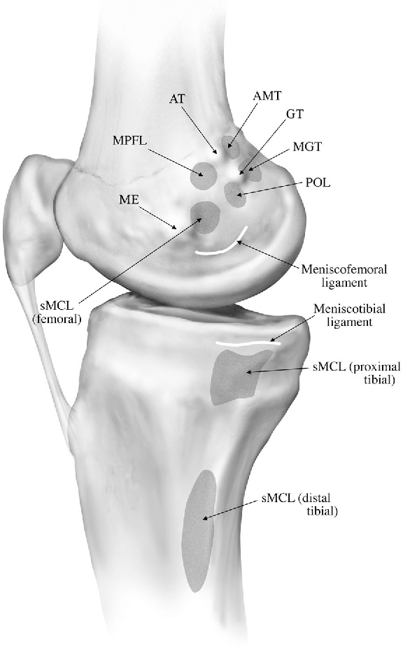 The anatomy of the medial part of the knee. - Semantic Scholar