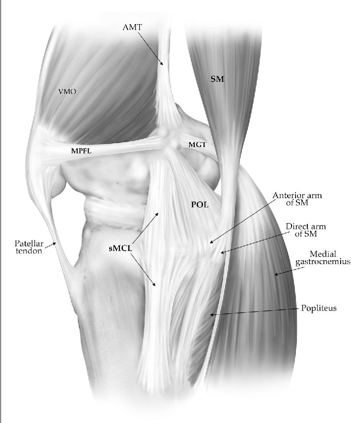 Figure 3 from The anatomy of the medial part of the knee. - Semantic ...