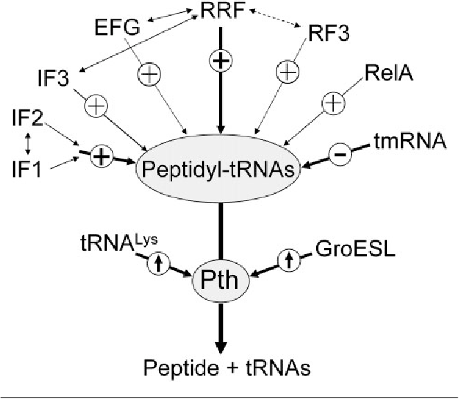 Mo Diagram Cyanide