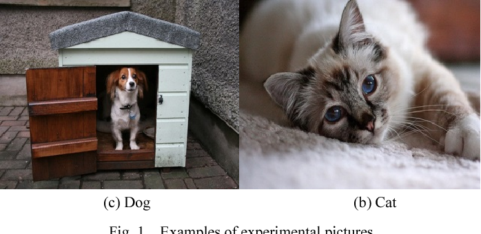 Fig. 1. Examples of experimental pictures