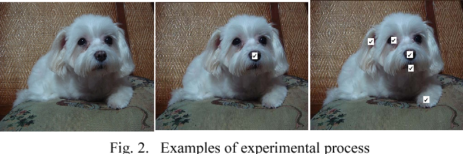 Fig. 2. Examples of experimental process