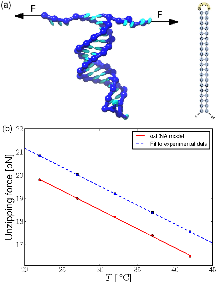 Figure 10 from a nucleotide level coarse grained model of rna fig 10 a a snapshot from an oxrna simulation of unzipping of ccuart Images