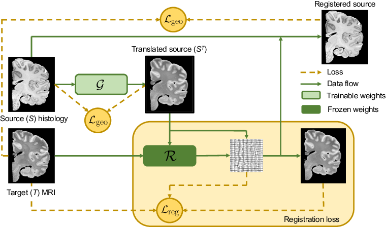 Figure 1 for Synth-by-Reg (SbR): Contrastive learning for synthesis-based registration of paired images