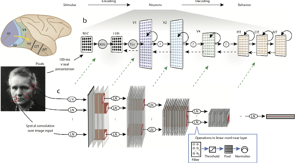 Figure 4 for Artificial neural networks for neuroscientists: A primer