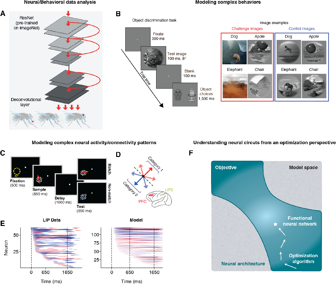 Figure 1 for Artificial neural networks for neuroscientists: A primer