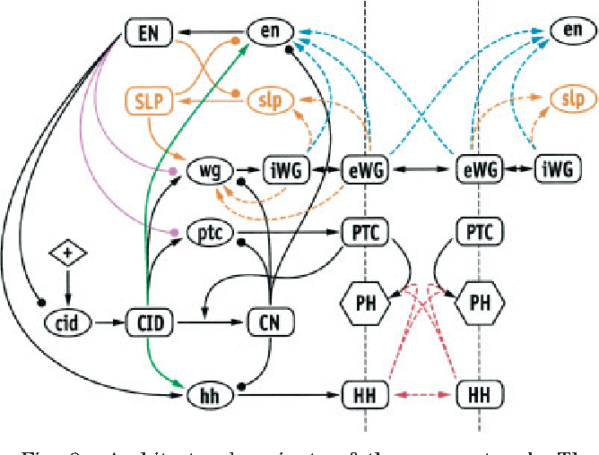design and constraints of the drosophila segment polarity module Seven Segment Display Connection Diagram design and constraints of the drosophila segment polarity module robust spatial patterning emerges from intertwined cell state switches semantic scholar