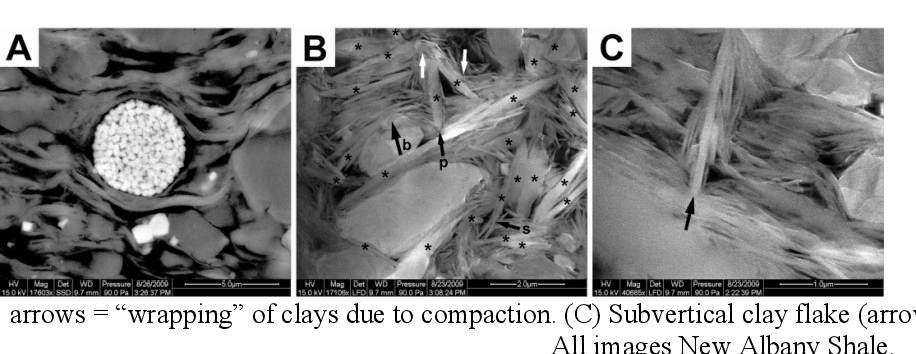 Shale Microfabrics and Pore Development - An Overview with