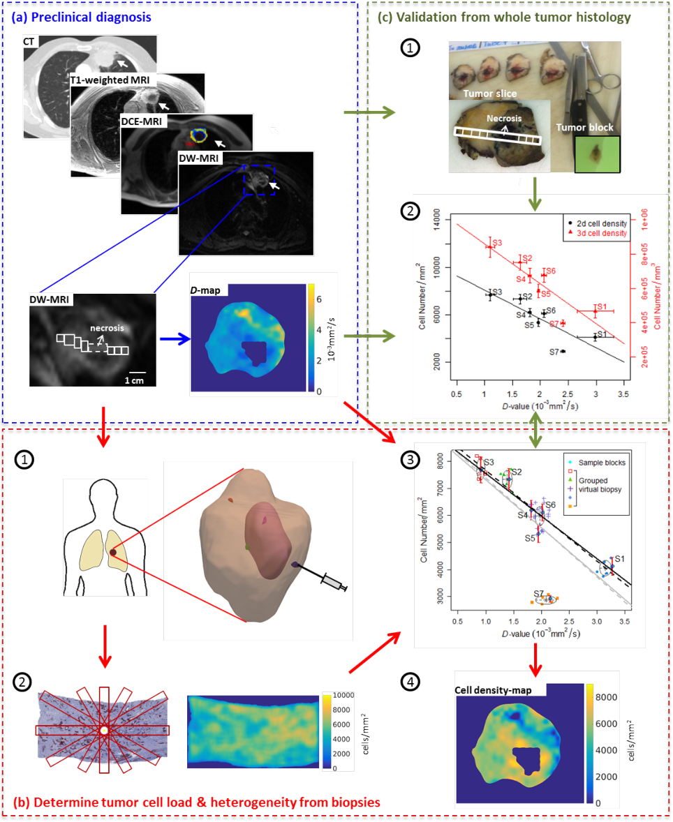 Figure 1 for Diffusion-weighted MRI-guided needle biopsies permit quantitative tumor heterogeneity assessment and cell load estimation