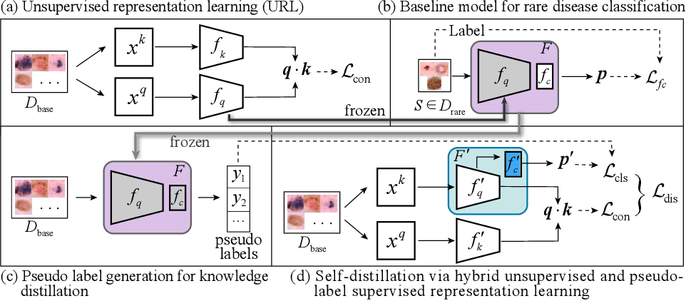 Figure 1 for Unsupervised Representation Learning Meets Pseudo-Label Supervised Self-Distillation: A New Approach to Rare Disease Classification