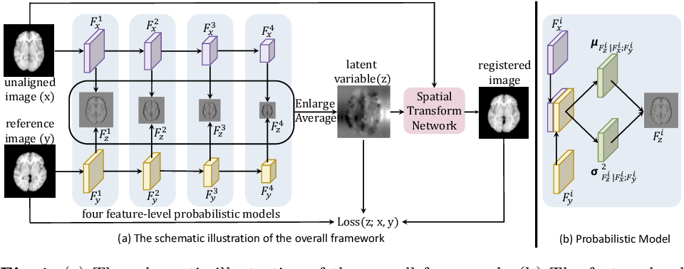 Figure 1 for Probabilistic Multilayer Regularization Network for Unsupervised 3D Brain Image Registration
