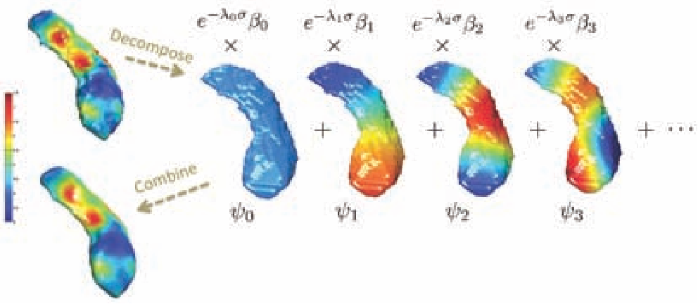 Figure 2 for Unified Heat Kernel Regression for Diffusion, Kernel Smoothing and Wavelets on Manifolds and Its Application to Mandible Growth Modeling in CT Images