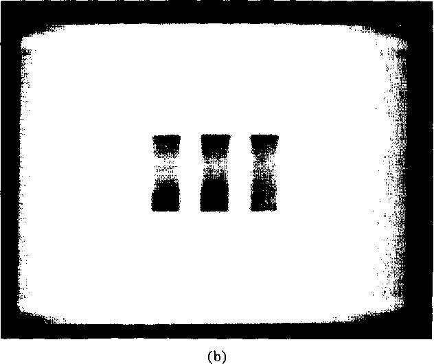 Fig. 7. Tomogrdms reconstructed from 18 projections generated by rotating the transducer. (a) Top layer. (b) Bottom layer.