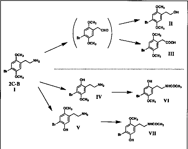 Figure 13 from In vivo metabolism of 4-bromo-2,5
