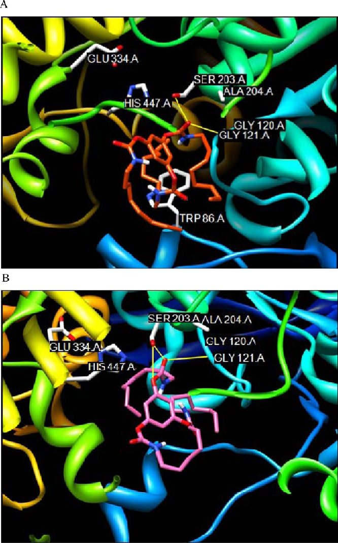 Figure 9. Molecular docking of (1,3,5)-(trans,trans,trans)-tricarbamate rotamer of inhibitor 1, with restricted rotations of the carbamyl CN partial double bonds, into the active sites of X-ray crystal structure of mouse AChE (2HA3)4 results in two unlikely binding modes. (A) The carbamyl ester oxygen atom of the inhibitor is too far away from H447 of the catalytic triad. Therefore, this rotamer is not a pseudo substrate inhibitor of the enzyme. (B) An octylcarbamy group of this rotamer blocks the hydrogen bond formation between the carbamyl ester oxygen atom of the inhibitor and the H447 of the catalytic triad. Therefore, this rotamer can not react with the enzyme.