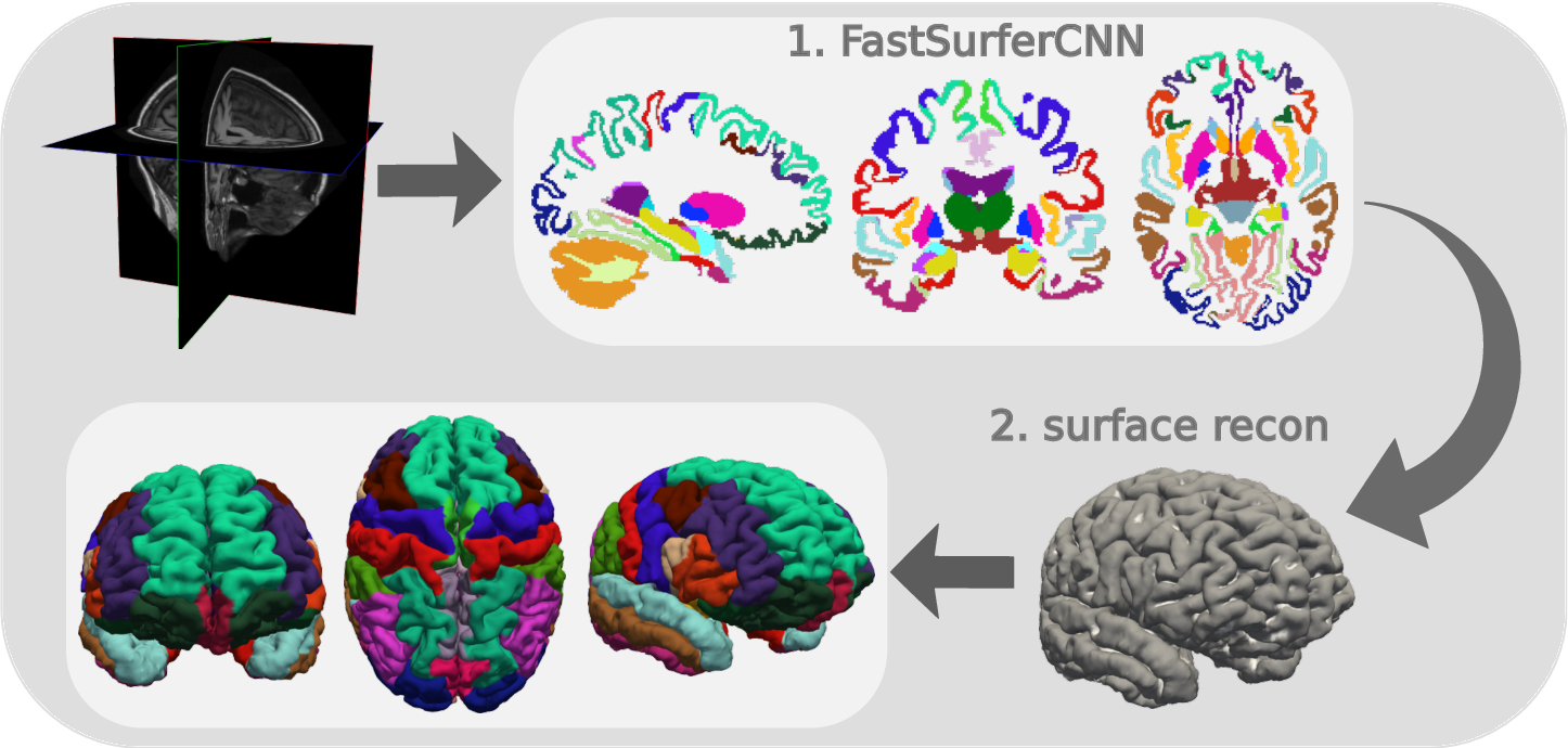 Figure 1 for FastSurfer -- A fast and accurate deep learning based neuroimaging pipeline