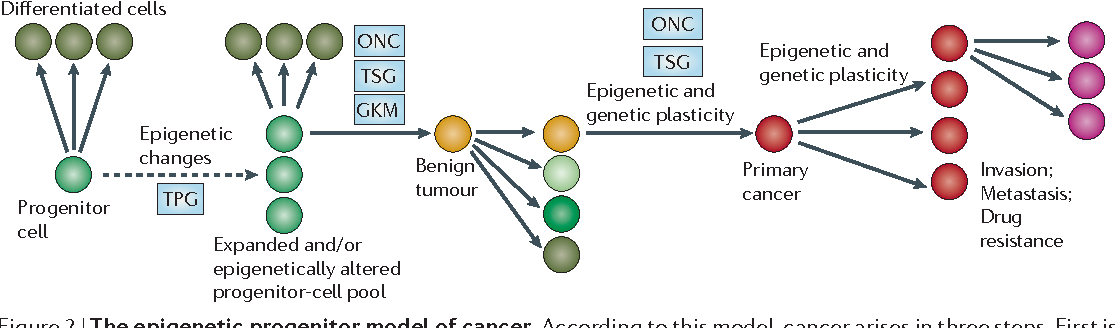 the epigenetic progenitor origin of human cancer semantic scholar