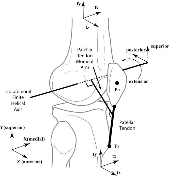 Three Dimensional In Vivo Quantification Of Knee Kinematics In