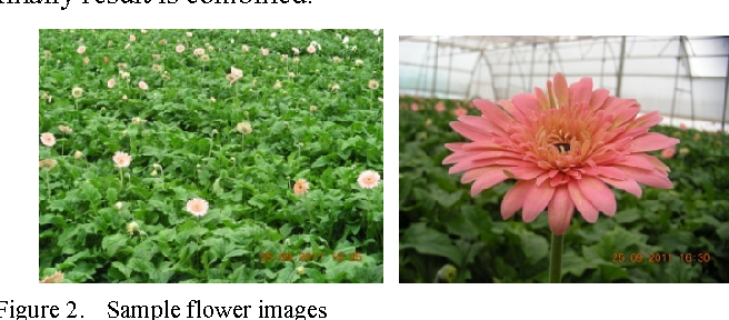 Figure 2. Sample flower images