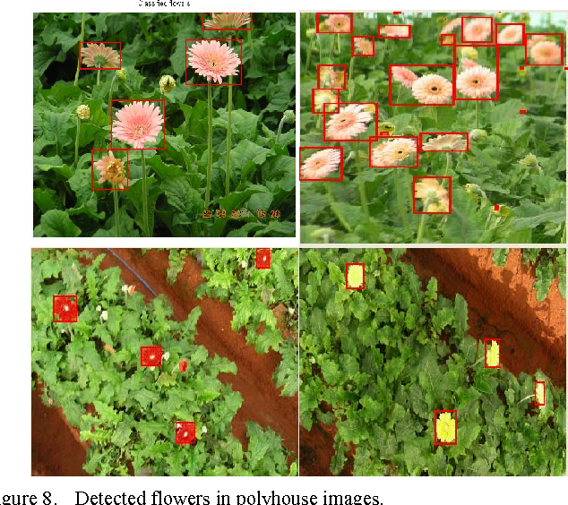 Figure 8. Detected flowers in polyhouse images.