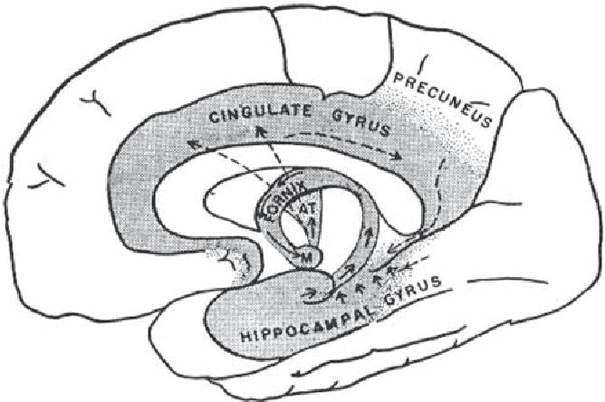 Anatomy of Neuropsychiatry the New Anatomy of the Basal Forebrain ...
