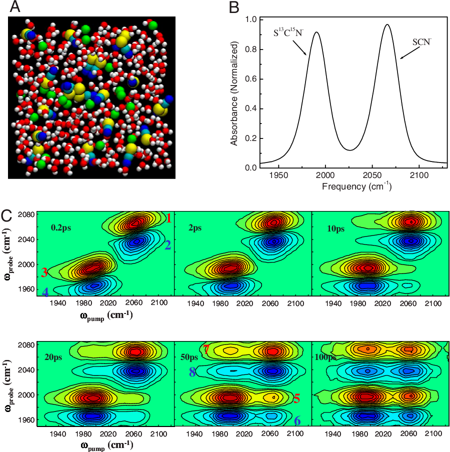 Ion clustering in aqueous solutions probed with vibrational