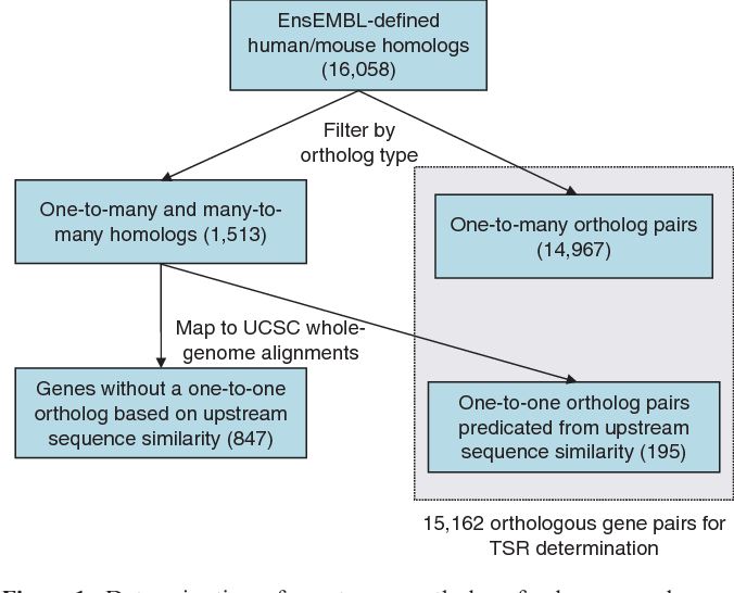 Figure 1. Determination of one-to-one orthologs for human and mouse genes. An initial set of homologs was downloaded from EnsEMBL v41 (30). All homologs annotated as 'one2one' are extracted. To select the closest putative ortholog pairs from homologs with 'one2many' or 'many2many' relationships, we check for upstream conservation using the whole-genome human–mouse alignments (6). We re-annotate unambiguously aligned homologs as putative one-to-one orthologs, adding 195 gene pairs to our set and bringing the total number of orthologs to 15 162.