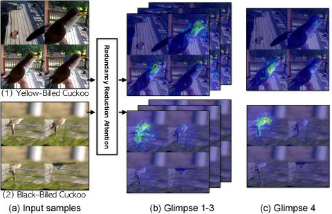 Figure 1 for Fine-grained Video Categorization with Redundancy Reduction Attention