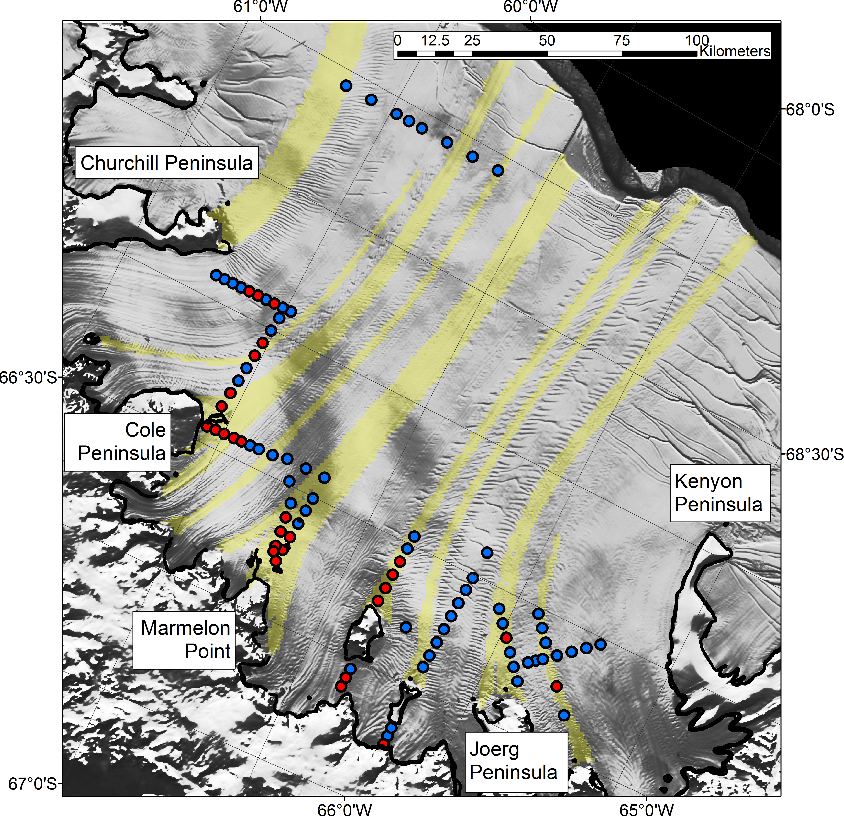 Fig. 8. Proposed marine ice bands in yellow (Holland et al., 2009) over MODIS imagery (Haran et al., 2005). Seismic sites with good ice-base reflections are in blue and poor ice-base reflections in red. The marine ice is formed close to the grounding line just offshore from major promontories. There is strong correspondence between sites with poor ice-base reflections and the proposed areas of marine ice formation.
