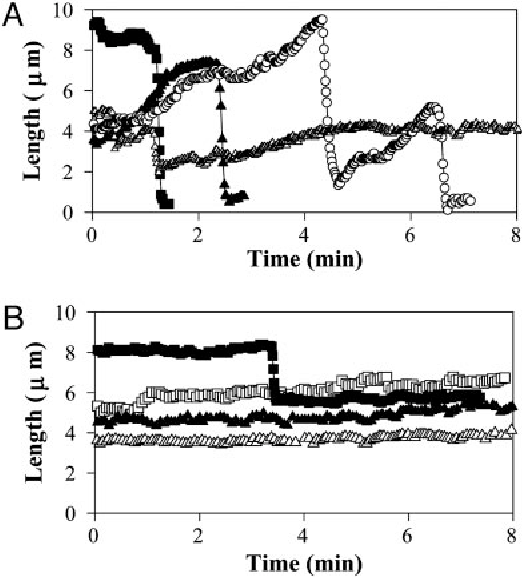 Fig. 5. Length changes of individual MTs at their plus ends at steady state in the absence (A) or presence (B) of 20 M griseofulvin (see Materials and Methods).