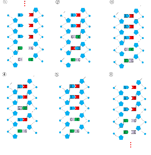 Figure 1 for Structure Learning of Deep Networks via DNA Computing Algorithm