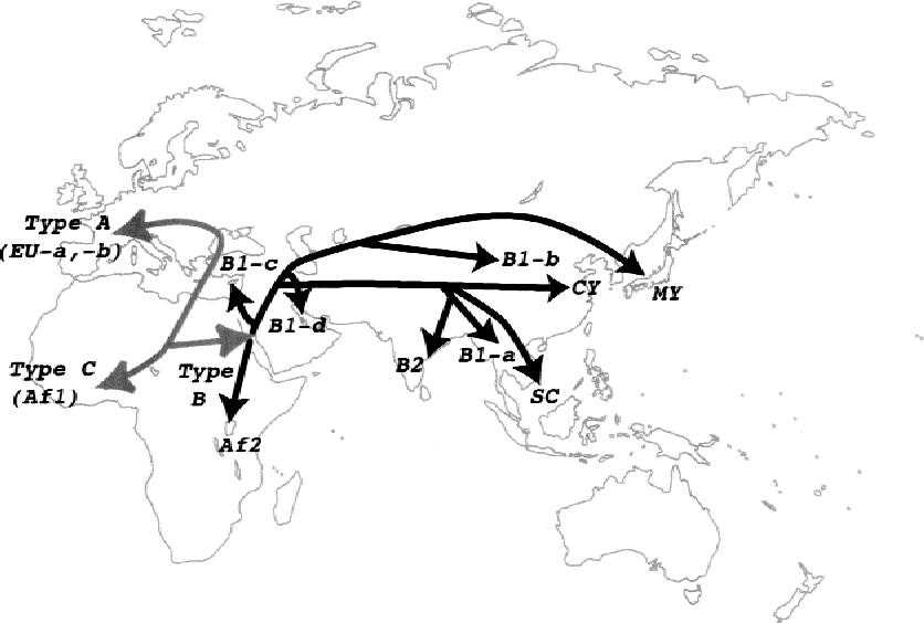 evolution of human polyomavirus jc implications for the population Guam Houses evolution of human polyomavirus jc implications for the population history of humans semantic scholar