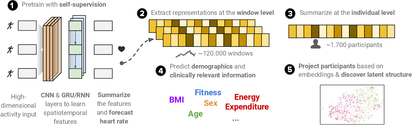 Figure 3 for Self-supervised transfer learning of physiological representations from free-living wearable data