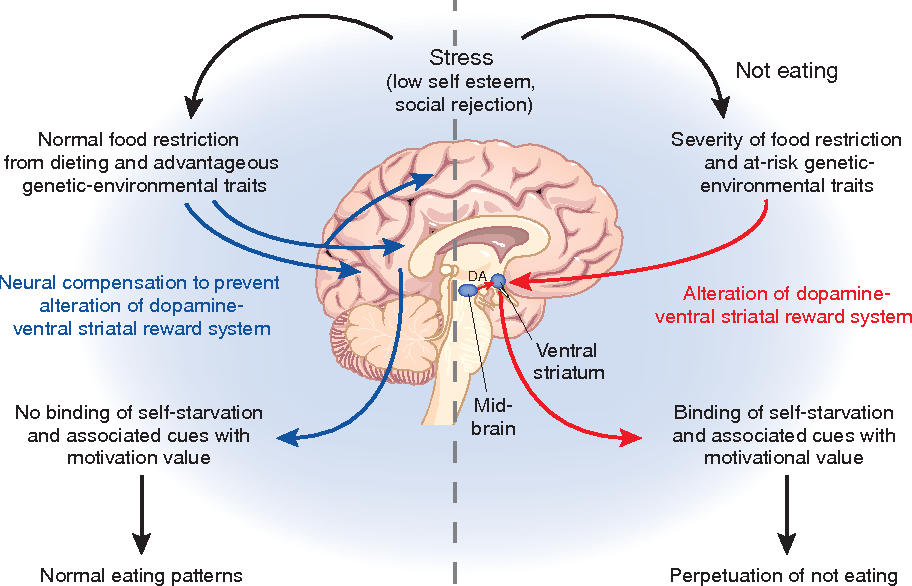 The Self Starving Brain >> Cracking The Moody Brain The Rewards Of Self Starvation Semantic