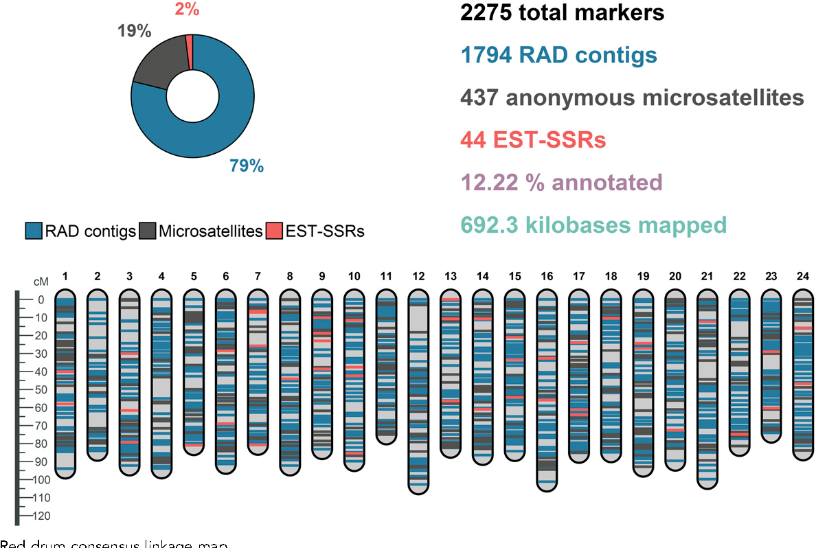 Figure 1 from Linkage Mapping and Comparative Genomics of