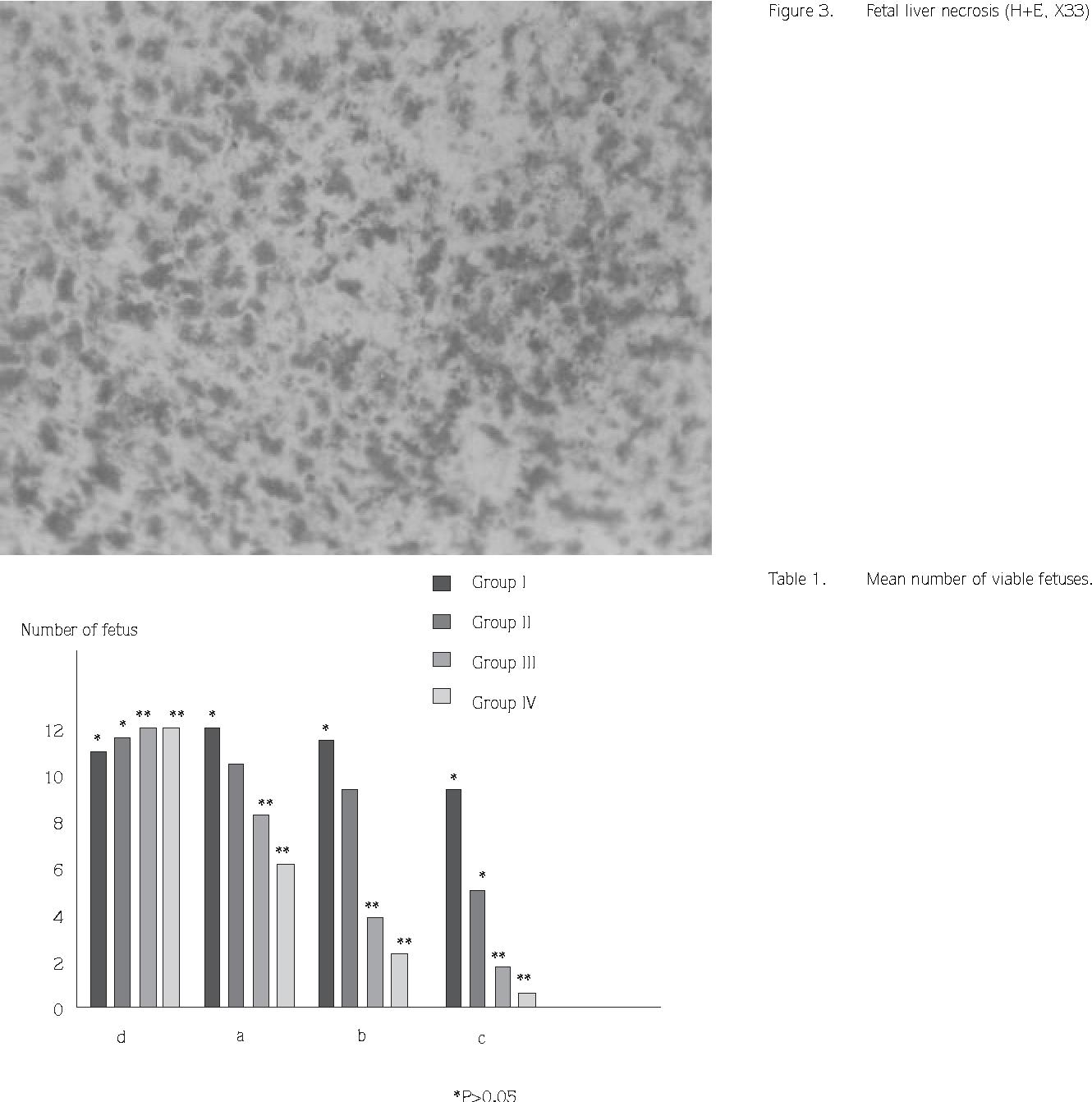 Figure 3. Fetal liver necrosis (H+E, X33)