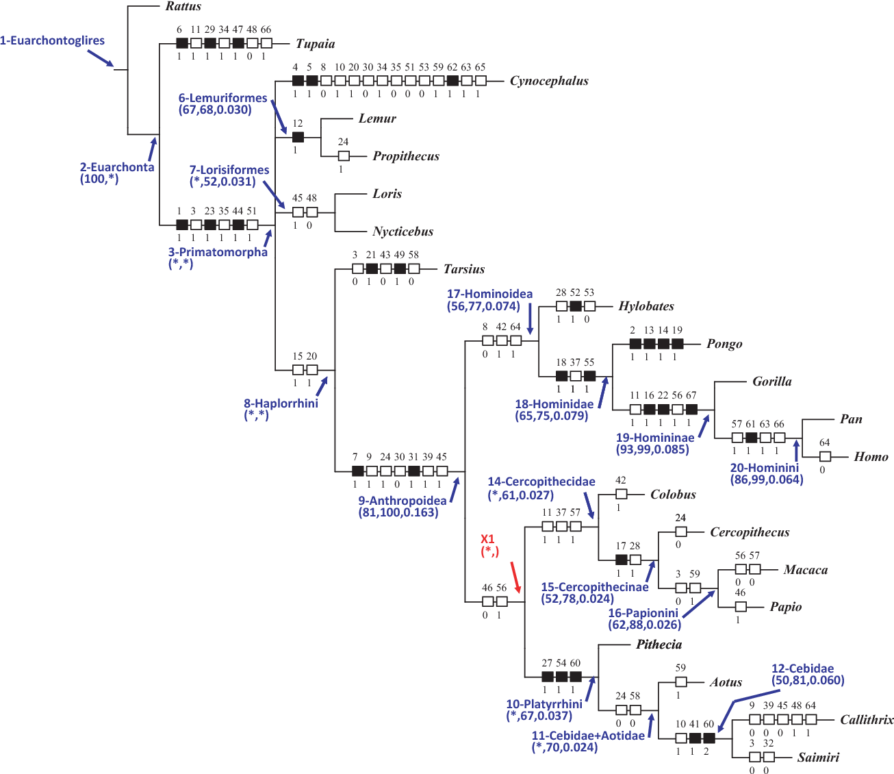 Soft-tissue anatomy of the primates: phylogenetic analyses based on ...