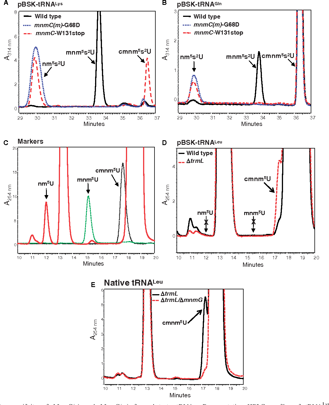 Figure 5. In vivo specificity of MnmC(o) and MnmC(m) for substrate tRNAs. Representative HPLC profiles of tRNALysmnm5s2UUU (A), tRNAGlncmnm5s2UUG (B) and tRNA Leu cmnm5s2UmAA (D) expressed from pIC1664, pIC1714 and pIC1665, respectively. The strains used in panels A and B were IC6017 (WT), IC6018 [mnmC(m)-G68D] and IC6019 (mnmC-W131stop). The strains used in panel D were IC5136 and IC5854. HPLC profiles of commercial markers are shown in panel C. Representative HPLC profiles of native tRNALeucmnm5UmAA purified from strains DtrmL (IC6374) and DtrmL/DmnmG (IC6411) are shown (E).