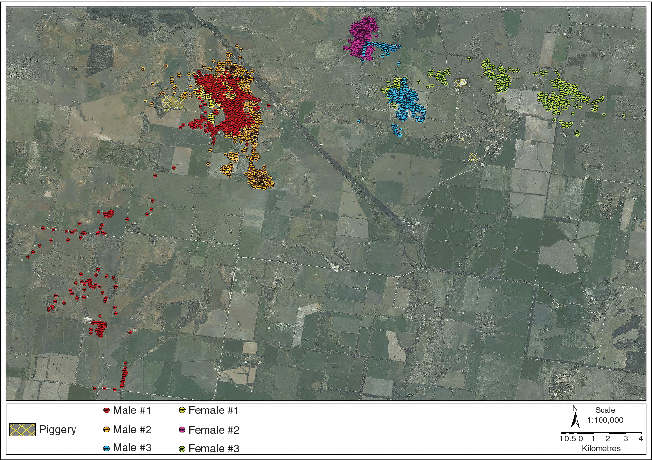 FIG 1: Total movement of six feral pigs in the vicinity of two commercial piggeries between June 2010 and December 2010 in Southern Queensland, Australia