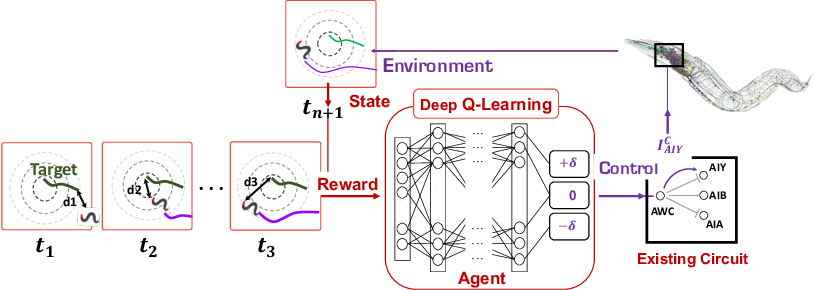 Figure 1 for Deep Reinforcement Learning for Neural Control