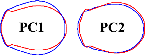Figure 5 from A Morphometric Outline Analysis of Ancestry