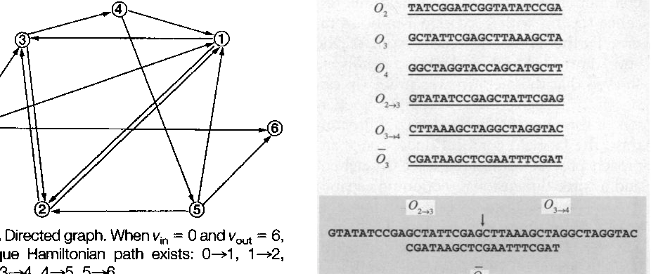 Fig. 1. Directed graph. When vi, = 0 and v, = 6, a unique Hamiltonian path exists: 0+1, 1+2, 2+3,3+4,4+5,5+6.