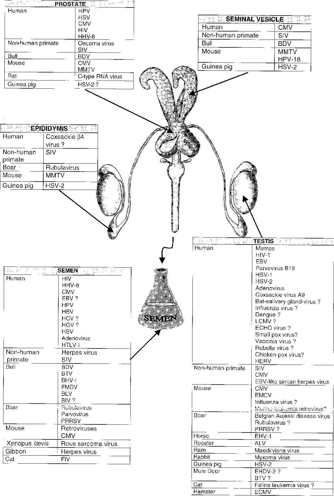 Viruses in the mammalian male genital tract and their effects on the ...