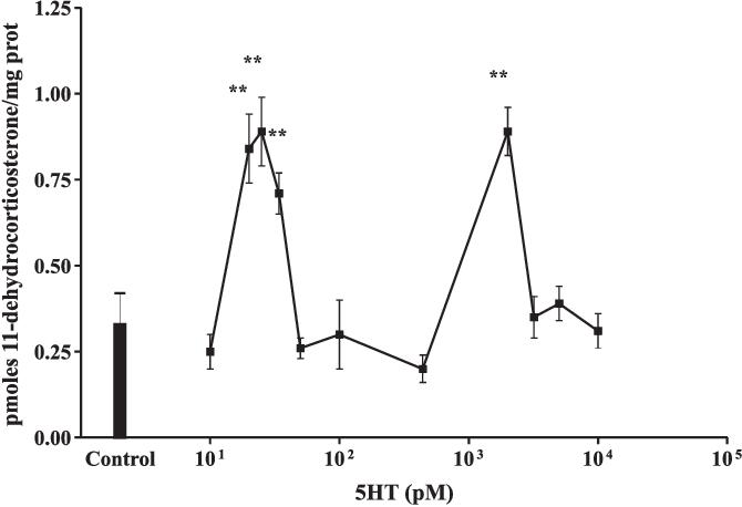 FIGURE 3. Effect of serotonin on 11ß-HSD2 activity.