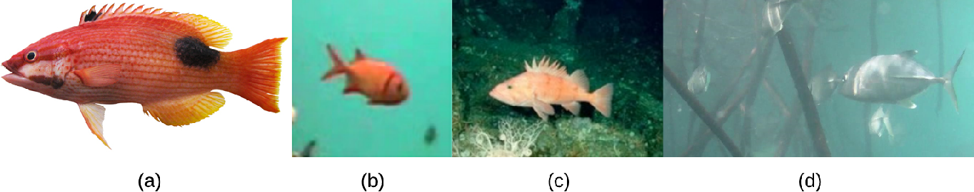 Figure 1 for A Realistic Fish-Habitat Dataset to Evaluate Algorithms for Underwater Visual Analysis